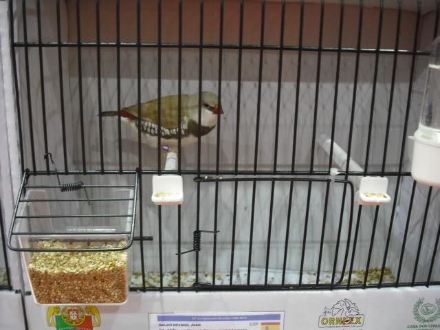 Diário do 58º Campeonato Mundial de Ornitologia Matosinhos 2010 DSCF3931