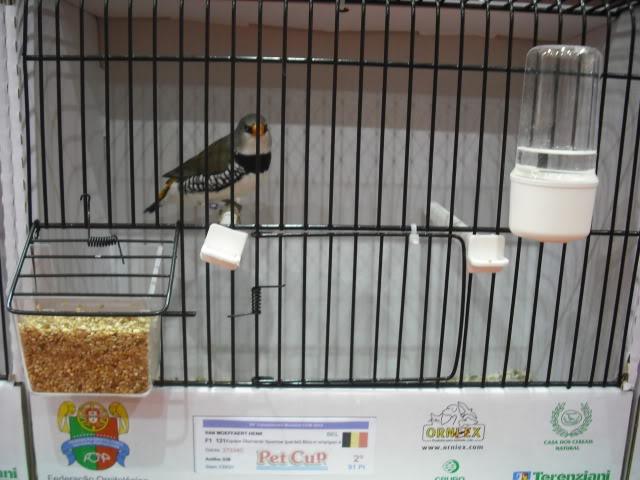 Diário do 58º Campeonato Mundial de Ornitologia Matosinhos 2010 DSCF3936
