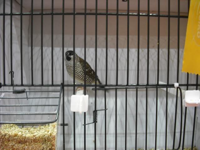 Diário do 58º Campeonato Mundial de Ornitologia Matosinhos 2010 DSCF3941