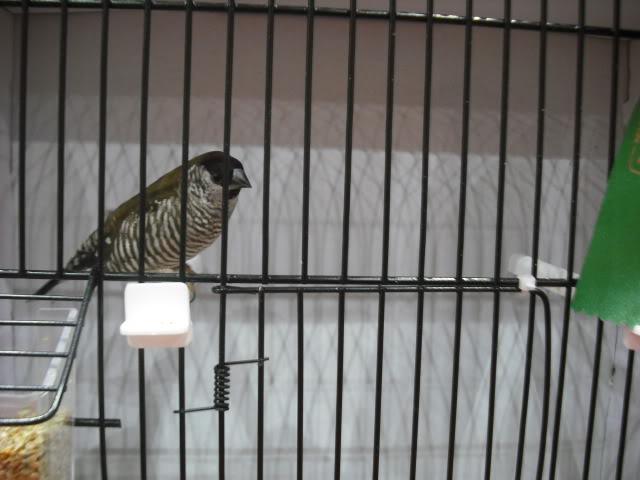 Diário do 58º Campeonato Mundial de Ornitologia Matosinhos 2010 DSCF3942