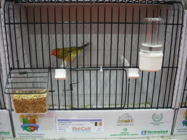 Diário do 58º Campeonato Mundial de Ornitologia Matosinhos 2010 DSCF3951