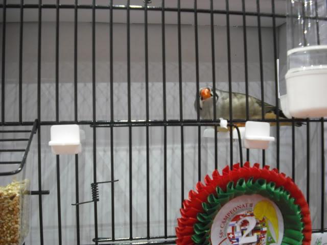 Diário do 58º Campeonato Mundial de Ornitologia Matosinhos 2010 DSCF3952