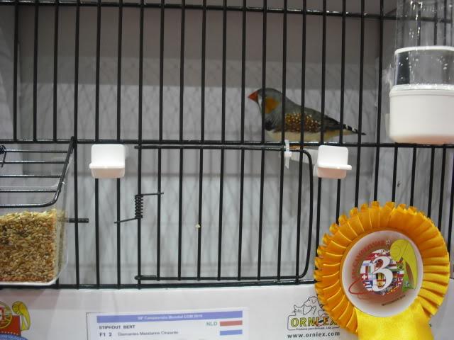 Diário do 58º Campeonato Mundial de Ornitologia Matosinhos 2010 DSCF3955
