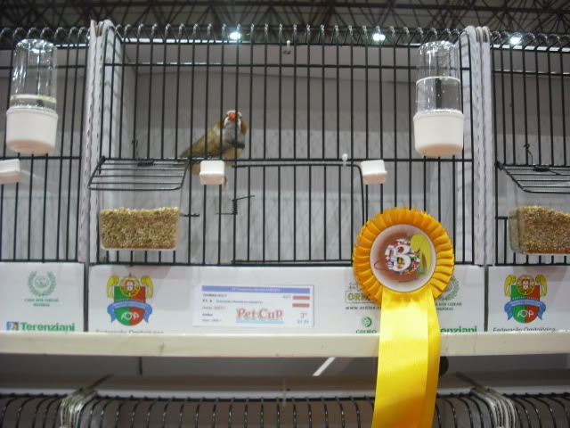 Diário do 58º Campeonato Mundial de Ornitologia Matosinhos 2010 DSCF3956