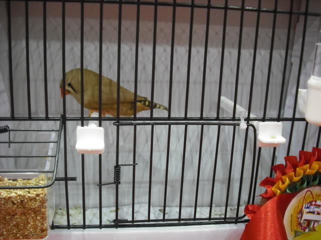 Diário do 58º Campeonato Mundial de Ornitologia Matosinhos 2010 DSCF3959