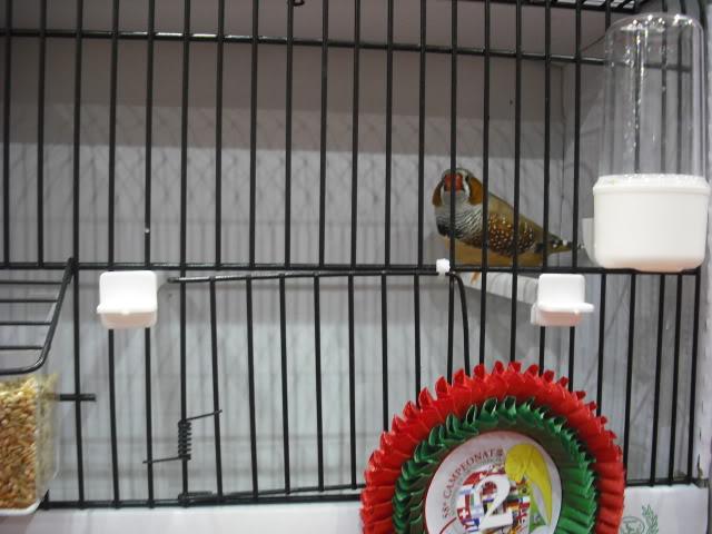 Diário do 58º Campeonato Mundial de Ornitologia Matosinhos 2010 DSCF3960