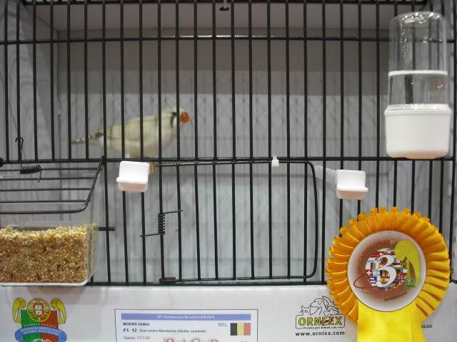 Diário do 58º Campeonato Mundial de Ornitologia Matosinhos 2010 DSCF3974