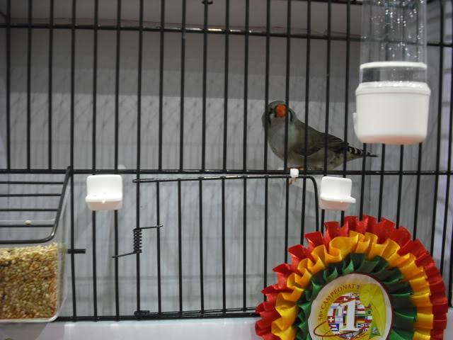 Diário do 58º Campeonato Mundial de Ornitologia Matosinhos 2010 DSCF3986