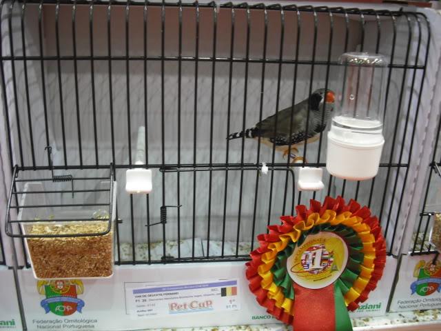 Diário do 58º Campeonato Mundial de Ornitologia Matosinhos 2010 DSCF3988