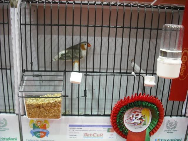 Diário do 58º Campeonato Mundial de Ornitologia Matosinhos 2010 DSCF3999