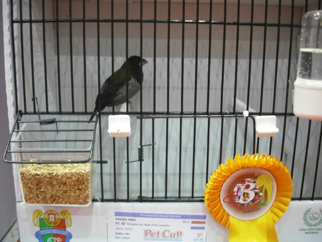 Diário do 58º Campeonato Mundial de Ornitologia Matosinhos 2010 DSCF4006