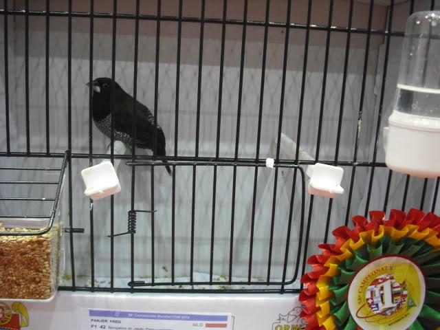 Diário do 58º Campeonato Mundial de Ornitologia Matosinhos 2010 DSCF4007