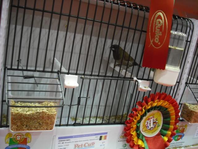 Diário do 58º Campeonato Mundial de Ornitologia Matosinhos 2010 DSCF4010