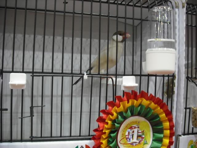 Diário do 58º Campeonato Mundial de Ornitologia Matosinhos 2010 DSCF4043