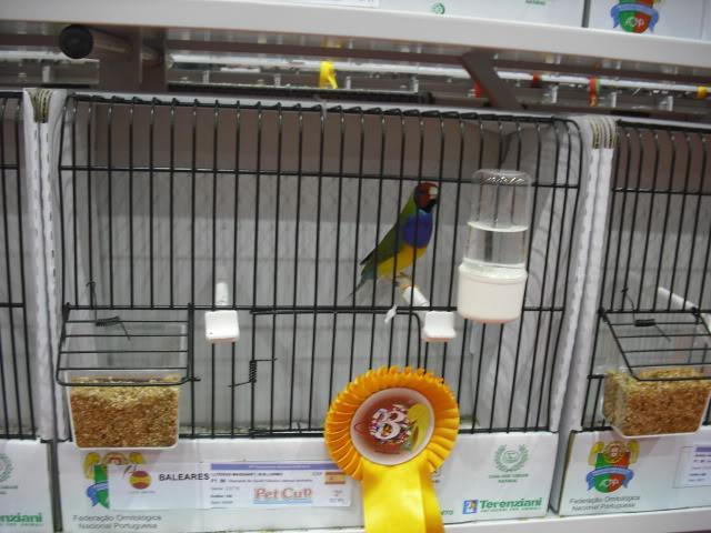 Diário do 58º Campeonato Mundial de Ornitologia Matosinhos 2010 DSCF4046