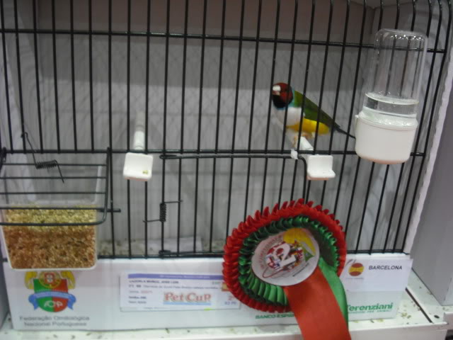 Diário do 58º Campeonato Mundial de Ornitologia Matosinhos 2010 DSCF4056