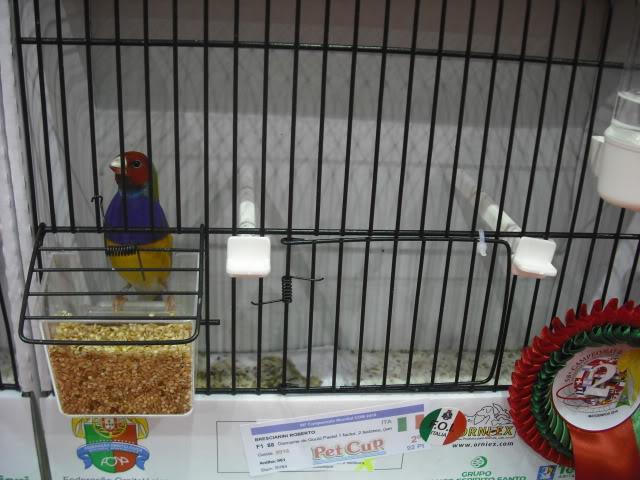 Diário do 58º Campeonato Mundial de Ornitologia Matosinhos 2010 DSCF4057