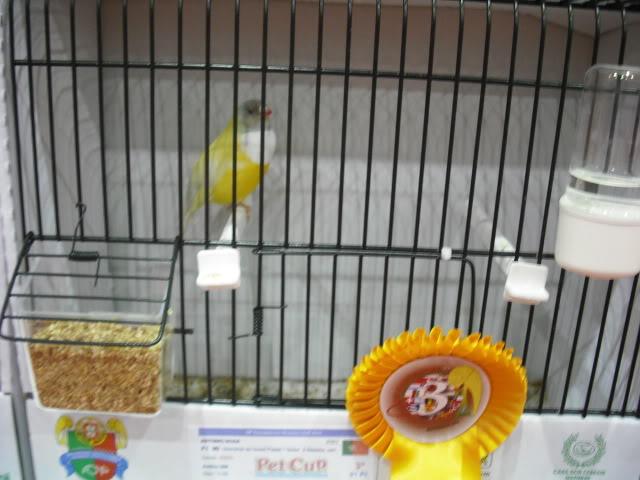 Diário do 58º Campeonato Mundial de Ornitologia Matosinhos 2010 DSCF4060