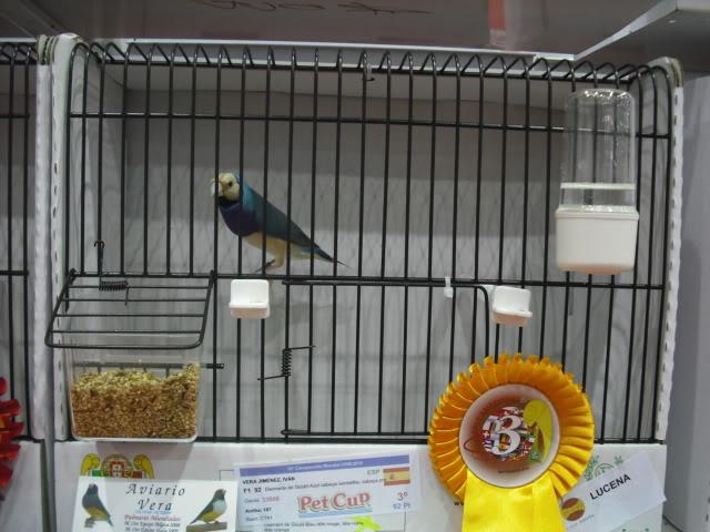 Diário do 58º Campeonato Mundial de Ornitologia Matosinhos 2010 DSCF4065