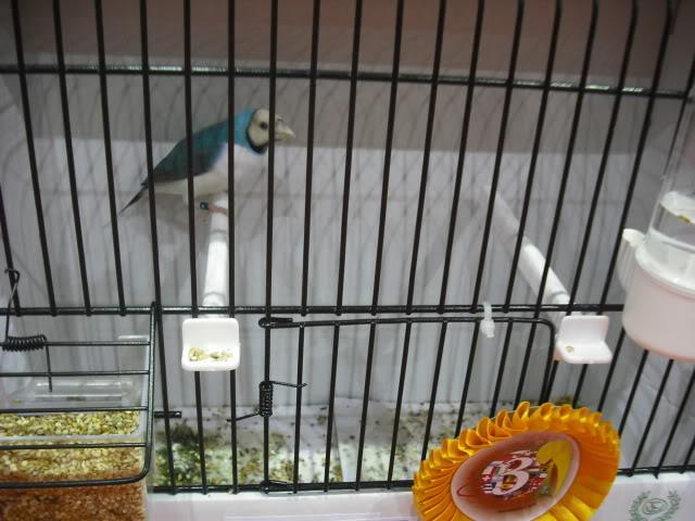 Diário do 58º Campeonato Mundial de Ornitologia Matosinhos 2010 DSCF4069