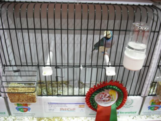 Diário do 58º Campeonato Mundial de Ornitologia Matosinhos 2010 DSCF4070