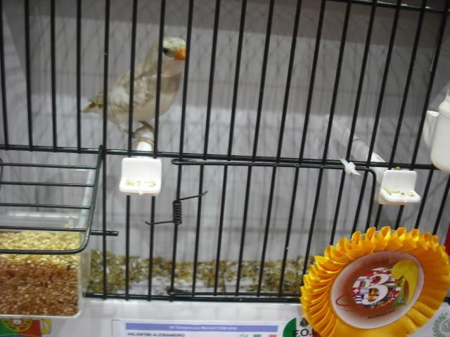 Diário do 58º Campeonato Mundial de Ornitologia Matosinhos 2010 DSCF4094