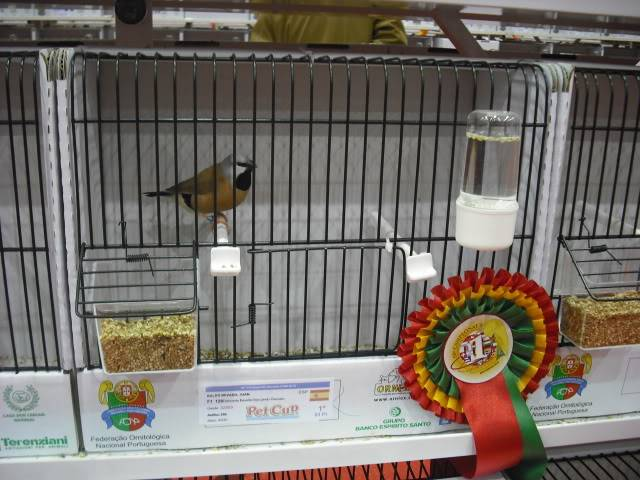 Diário do 58º Campeonato Mundial de Ornitologia Matosinhos 2010 DSCF4102