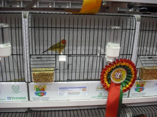 Diário do 58º Campeonato Mundial de Ornitologia Matosinhos 2010 DSCF4113