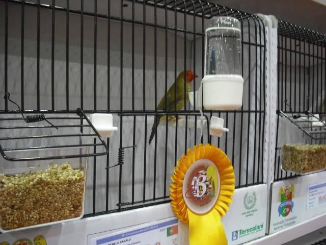 Diário do 58º Campeonato Mundial de Ornitologia Matosinhos 2010 DSCF4114