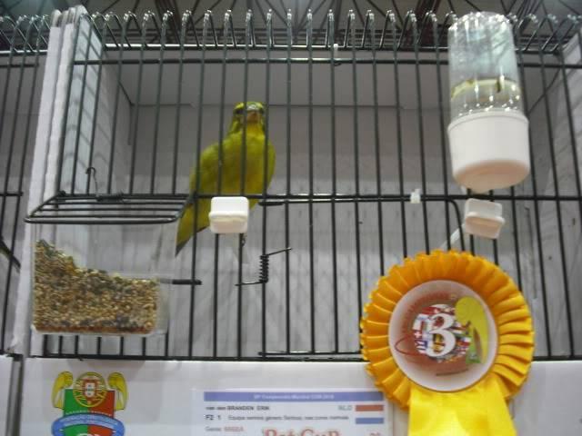 Diário do 58º Campeonato Mundial de Ornitologia Matosinhos 2010 DSCF4127