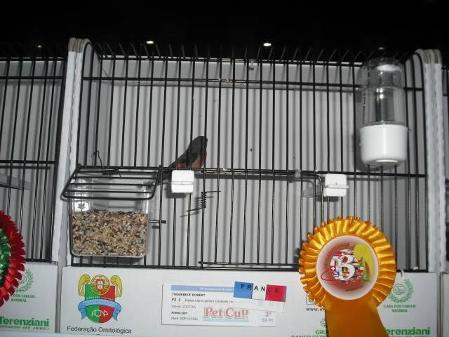Diário do 58º Campeonato Mundial de Ornitologia Matosinhos 2010 DSCF4132