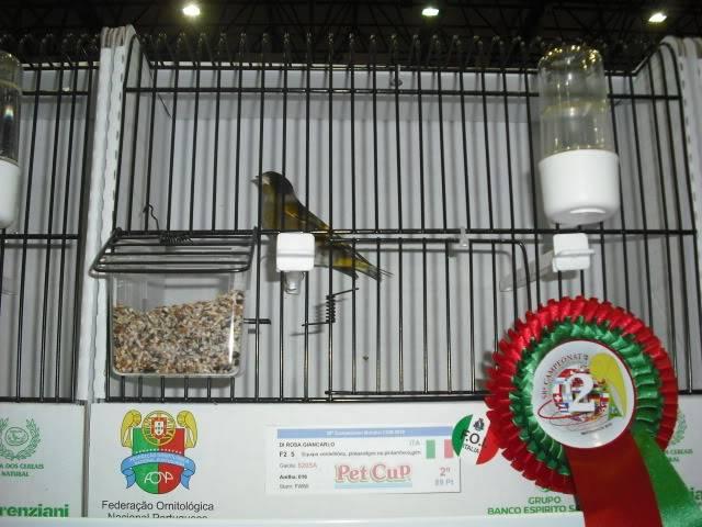 Diário do 58º Campeonato Mundial de Ornitologia Matosinhos 2010 DSCF4134