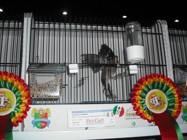 Diário do 58º Campeonato Mundial de Ornitologia Matosinhos 2010 DSCF4137