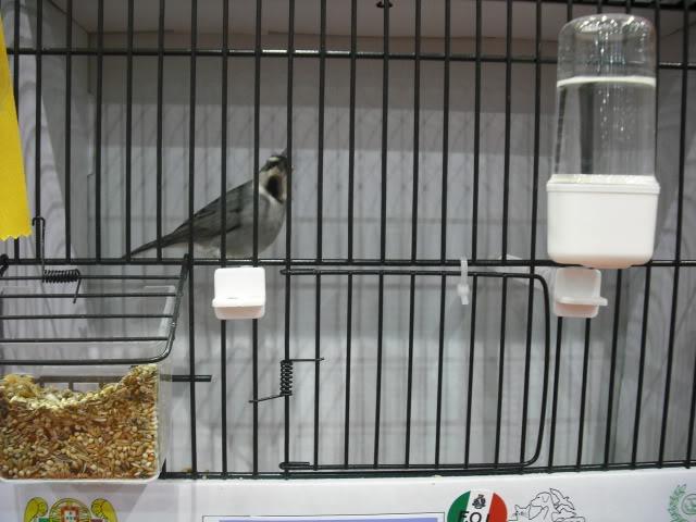 Diário do 58º Campeonato Mundial de Ornitologia Matosinhos 2010 DSCF4141
