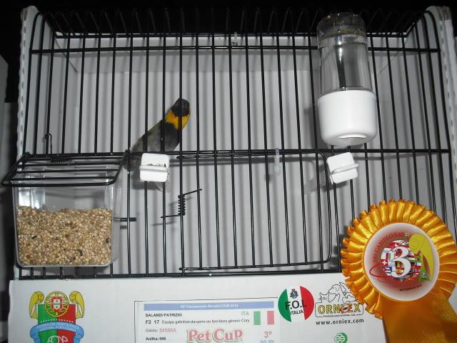 Diário do 58º Campeonato Mundial de Ornitologia Matosinhos 2010 DSCF4142