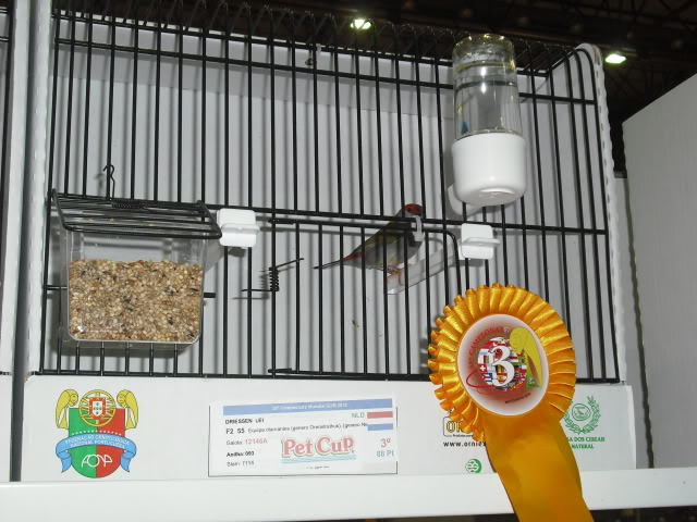Diário do 58º Campeonato Mundial de Ornitologia Matosinhos 2010 DSCF4169