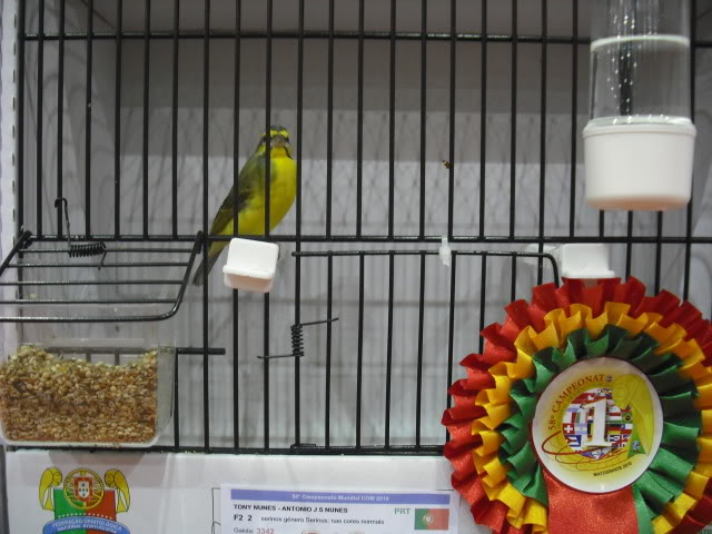 Diário do 58º Campeonato Mundial de Ornitologia Matosinhos 2010 DSCF4181