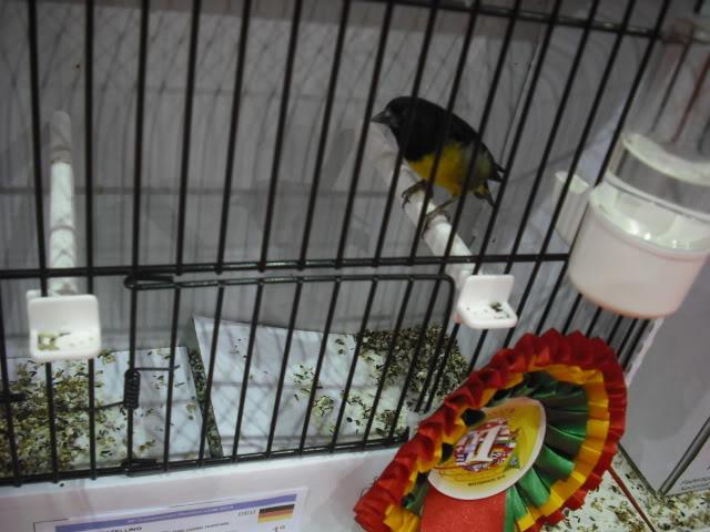 Diário do 58º Campeonato Mundial de Ornitologia Matosinhos 2010 DSCF4183