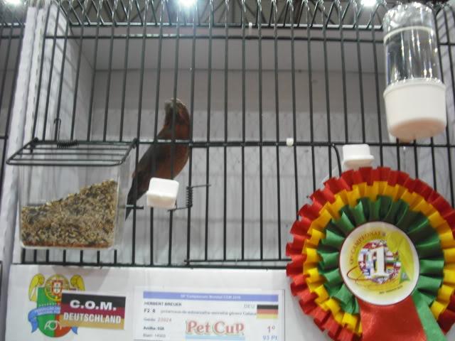 Diário do 58º Campeonato Mundial de Ornitologia Matosinhos 2010 DSCF4191