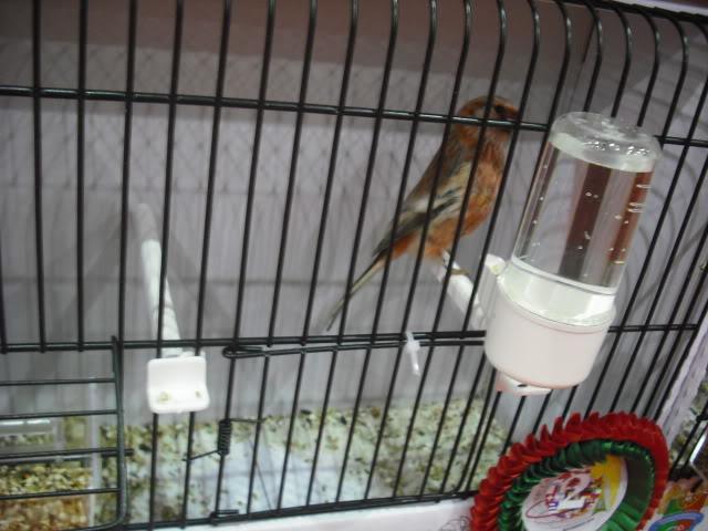 Diário do 58º Campeonato Mundial de Ornitologia Matosinhos 2010 DSCF4194