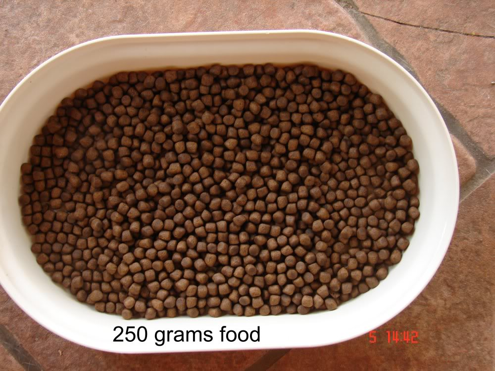 Free State Koi Food / Medicine DSC05873
