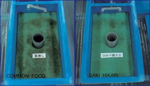 Aqua Master shortage Hikarifood