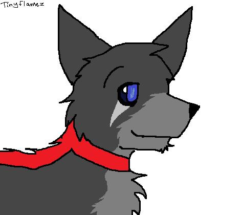 Awoken the Sled Dog Wolf-SledDog