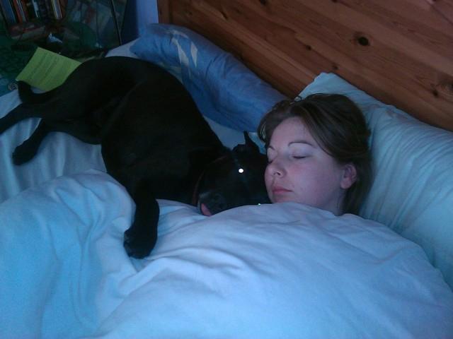 Ben, 4 (ish) years old, Labrador x IMAG_0354