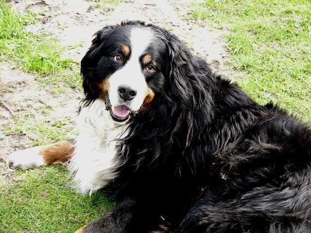 Der Hundethread K-DiesundDas034