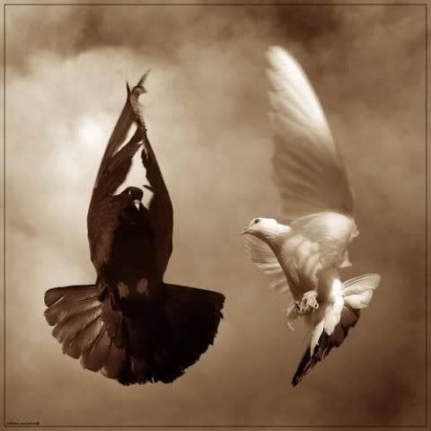 Sve vrste Ptica - Page 7 28163449_17948356_11880377_golubi