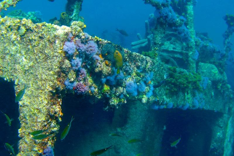Podvodni cudesni svet - Page 3 SunkenShip