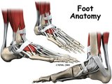 Sala de estudos de Anatomia- Pés Th_anatomia001