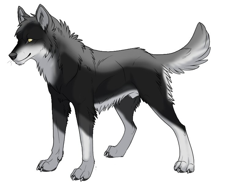 Storm (Dark Wolf) Unclaimed_free_design_1_by_Lowes4804_zps3ac097b0