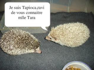 Aaahhh l'amour!!! PICT0679